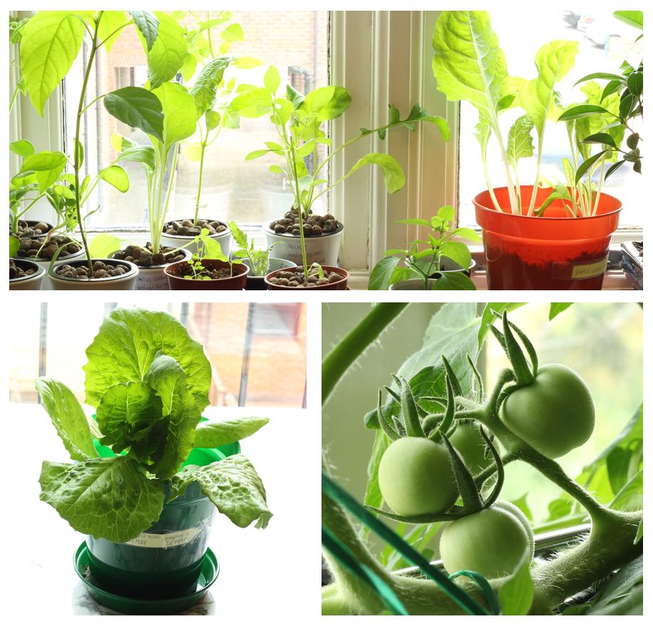 indoor vegetable garden, how to grow vegetables, garden at home, how to grow hydroponics